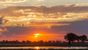 Africa, Southern Africa, Botswana, Chobe National Park, Landscape, Landscapes, Scene, Scenes, Scenic, Scenics, Nature, Outdoor, Horizontal, Sunset, Dusk, Coucher de soleil, Blue Sky, Orange sky, Tree, Silhouette, , , , ,