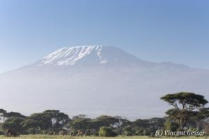 African elephant (Loxodonta africana) group walking in front of Mount Kilimajaro, Amboseli National Park, Kenya, 1