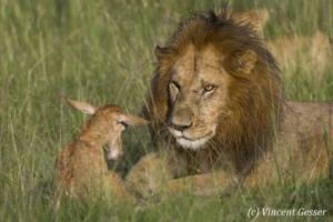 Lion et topi 011 _R5G1635