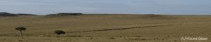 Panorama Masai Mara 002 _DM30693-93-94
