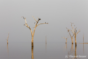 Trees and grey water landscape on Lake Kariba, Zimbabwe, 1