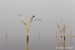 Trees and grey water landscape on Lake Kariba, Zimbabwe, 1