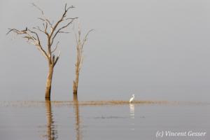 Trees and grey water landscape on Lake Kariba, Zimbabwe, 2