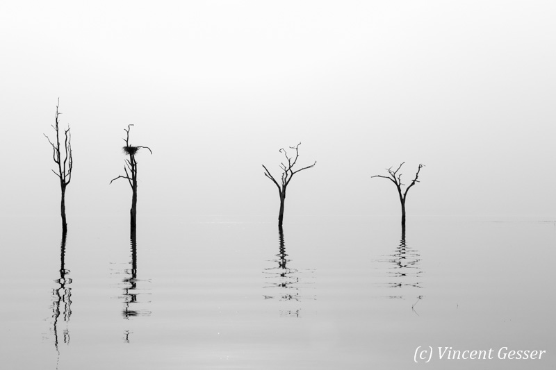 Black and White trees reflections in Lake Kariba, Zimbabwe