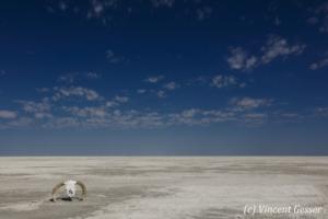 Landscape of Makgadikgadi Pans National Park, Botswana