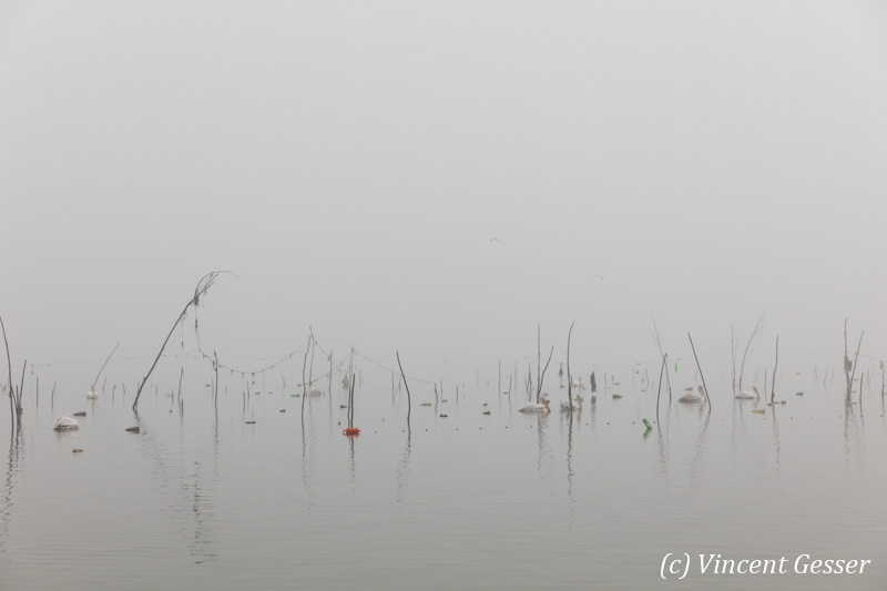 Mist over Lake Kerkini, Greece