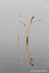 Tree, bird and wather landscape on Lake Kariba, Zimbabwe, 1