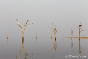 Tree, bird and wather landscape on Lake Kariba, Zimbabwe, 2
