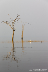 Tree and bird island landscape on Lake Kariba, Zimbabwe
