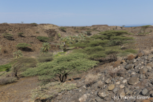 Oasis setting of Mountain of the Moon movie near Lake Turkana, Kenya, 1