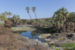 Oasis setting of Mountain of the Moon movie near Lake Turkana, Kenya, 3