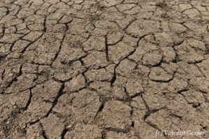 Cracked ground of the Chalbi Desert, Kenya