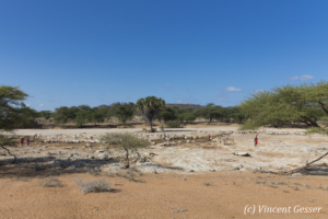 Oasis in the Kaisut Desert with Samburus keeping their goats, Kenya