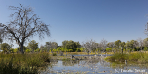 Landscape of Khwai Concession, Botswana