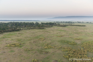Aerial view and photography Masai Mara National Reserve at dawn, TransMara, Kenya, 5