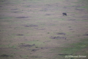 Aerial view and photography Masai Mara National Reserve at dawn, TransMara, Kenya, 6