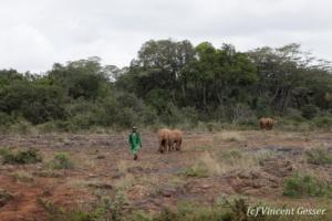 elephant-071-_ds33226