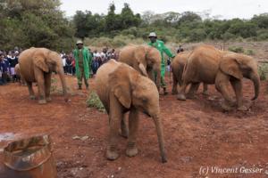 elephant-074-_ds33223