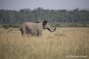 elephant-167-_dx_1254