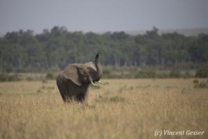 elephant-168-_dx_1250