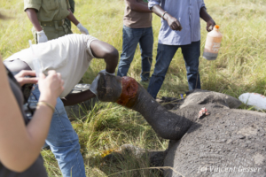 elephant-169-_d3_9832
