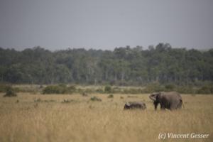elephant-179-_dx_1260