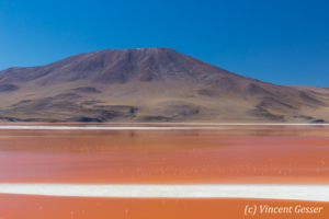 Landscape of Laguna Colorada with flamingos, Bolivia
