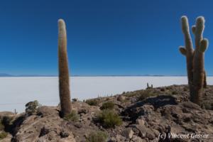 Landscapes of cactus on Isla Incahuasi, on the Salar of Uyuni, Bolivia