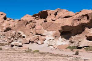 Yerbas Buenas Petroglyphs in Chile - Lama