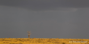 The Maasai Mara plains before a thunderstorm, Kenya